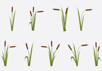 Free Reeds Vector Illustration - бесплатный vector #364357