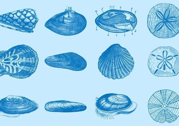 Sea Shells - vector gratuit #366787