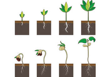 Grow Up Plant Vector - Free vector #367727