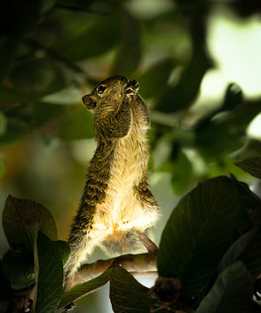 Squirrel Pray - image #368077 gratis