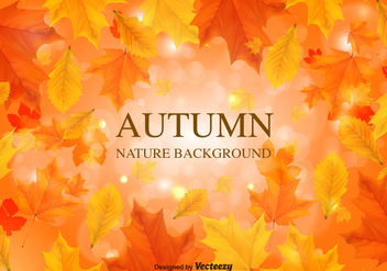 Fall Background Vector Leaves - vector gratuit #369517