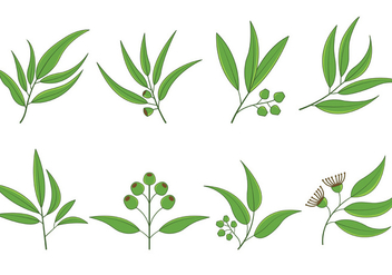 Set Of Eucalyptus Vector - vector gratuit #369737
