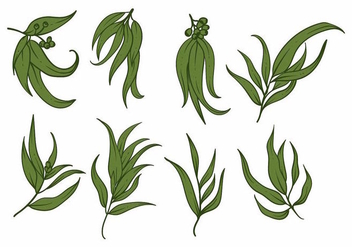 Eucalyptus Icon Set - vector gratuit #370417