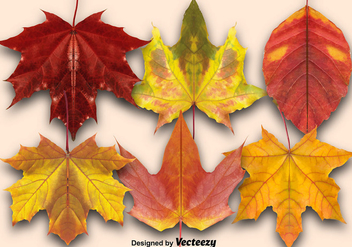 Vector Set Of Autumn Leaves - vector gratuit #370887