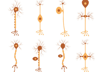 Set Of Neuron Vector - Free vector #371097