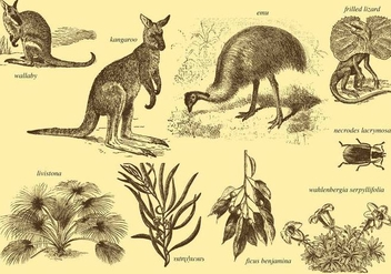 Flora And Fauna Of Australia - бесплатный vector #372137