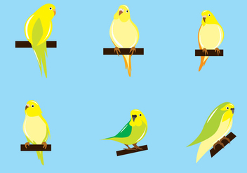 Budgie Vector - Free vector #372197