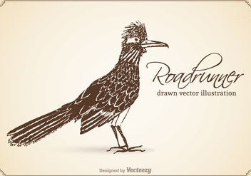 Free Vector Drawn Roadrunner Illustration - Free vector #372917
