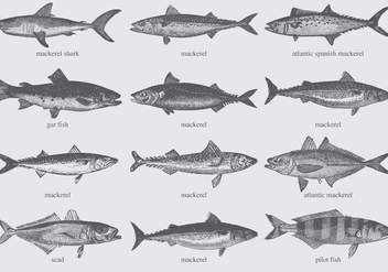 Mackerel Drawings - vector gratuit #374317