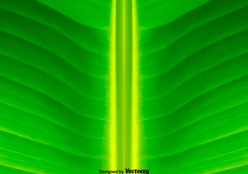 Green Leaf Background - Vector - Kostenloses vector #374357
