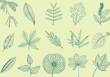 Leaves Drawings - Free vector #374427