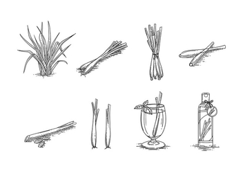 LEMONGRASS SKETCH VECTOR FREE - бесплатный vector #375827