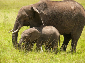 Mum and her Baby ! - image #377127 gratis
