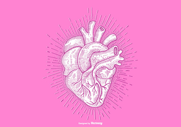 HEART - LINE DRAWING - vector gratuit #379497