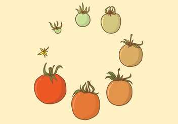 Tomato Grow Up Set - vector #380267 gratis