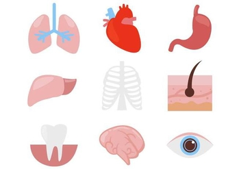 Free Human Organ Body Parts Icons Vector - Kostenloses vector #380317