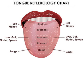 Tongue Reflexology Chart - бесплатный vector #380547