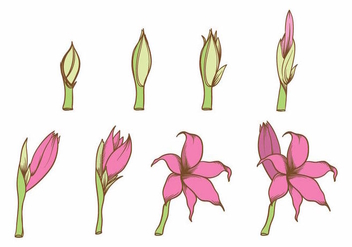 Grow Up Flower Plant Set - vector #380557 gratis
