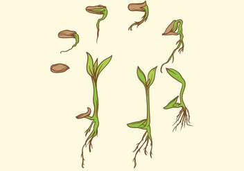 Grow Up Plant Set - vector #380657 gratis