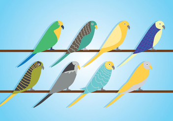 Budgie Vector - Free vector #382677