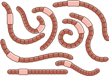 Pack of Earthworm Vectors - vector gratuit #383177