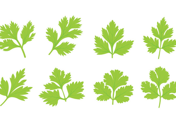 Set Of Cilantro Leaf Vector - vector gratuit #383817