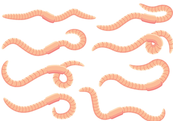 Earthworm Vectors - бесплатный vector #384077