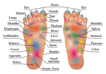 Reflexology Chart Vector - бесплатный vector #384607