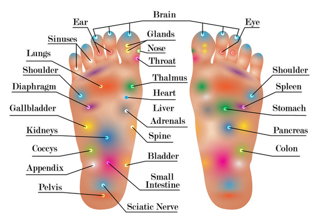 Reflexology Chart Vector Free Vector Download 384607 Cannypic