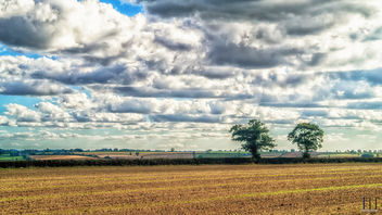 Lonely Trees - image #389447 gratis
