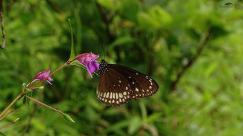 Butterfly on Flower Near Pune - Free image #392747