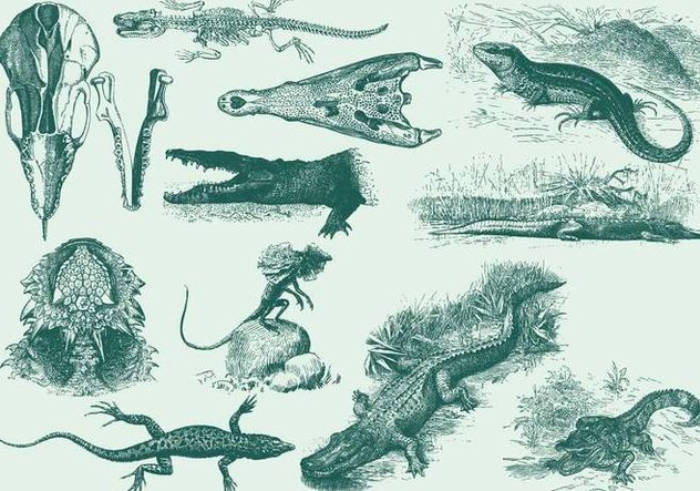 Vintage Reptile Illustrations - Free vector #395177