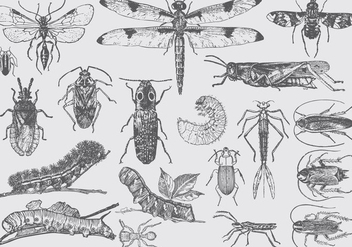 Vintage Insect Illustrations - vector #395407 gratis
