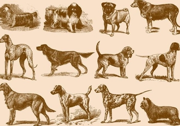 Vintage Brown Dog Illustrations - Free vector #395457