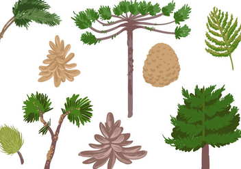 Free Conifer Vectors - бесплатный vector #395927