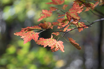 Sweet and sour! - image #397787 gratis