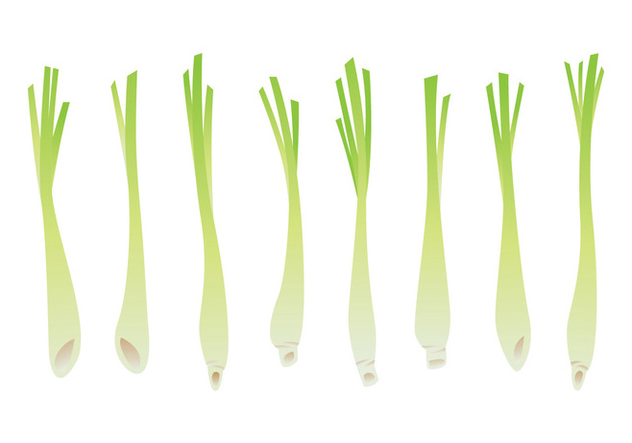 Lemongrass Vector Set - Kostenloses vector #399267