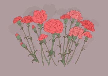 Carnation Flowers Vector - Kostenloses vector #399437