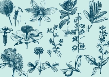 Blue Exotic Flower Illustrations - Free vector #402287