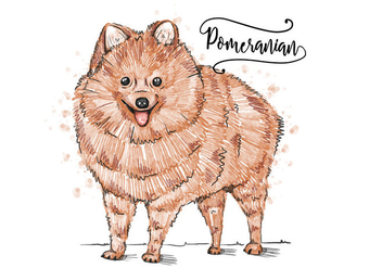 Free Pomeranian Background - vector #402797 gratis
