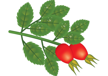 Rosehip Vector Plant - Free vector #403307