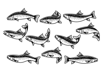 Free Rainbow Trout Vector - Free vector #404047