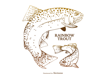 Free Rainbow Trout Vector Illustration - бесплатный vector #405707