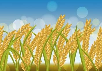 Rice Crop Flowers In The Field - vector #406527 gratis