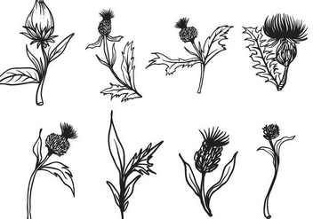 Free Hand Drawn Thistle Vector - Free vector #406707