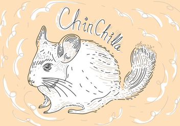 Free Chinchilla Vector Illustration - Kostenloses vector #408657