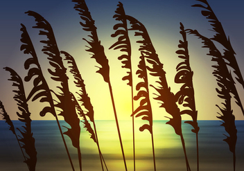 Sea Oats View - vector gratuit #410987