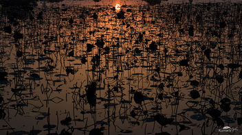 Evening Gradient Over Aquatic Plants On Lake - Kostenloses image #411317