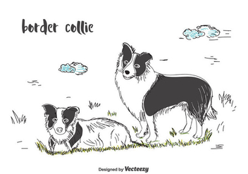 Border Collie Vector - Free vector #411597