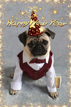 Pug Happy New Year - image #411847 gratis